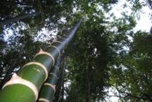 20110602024638-bambu.jpg